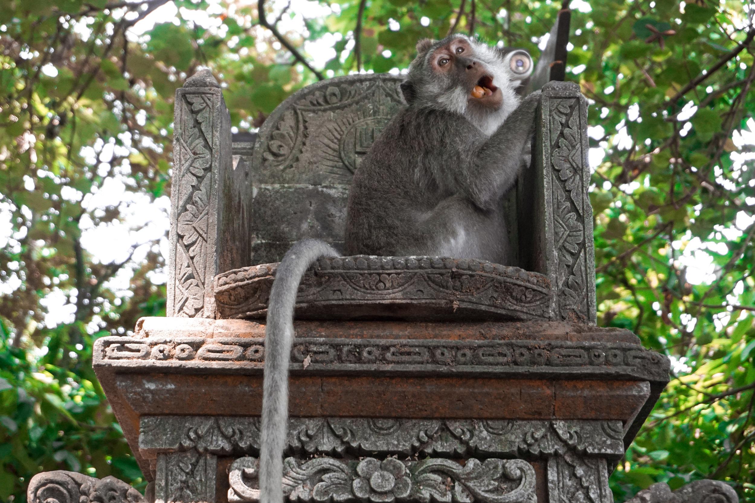 Bali - Ubud Monkey Forest