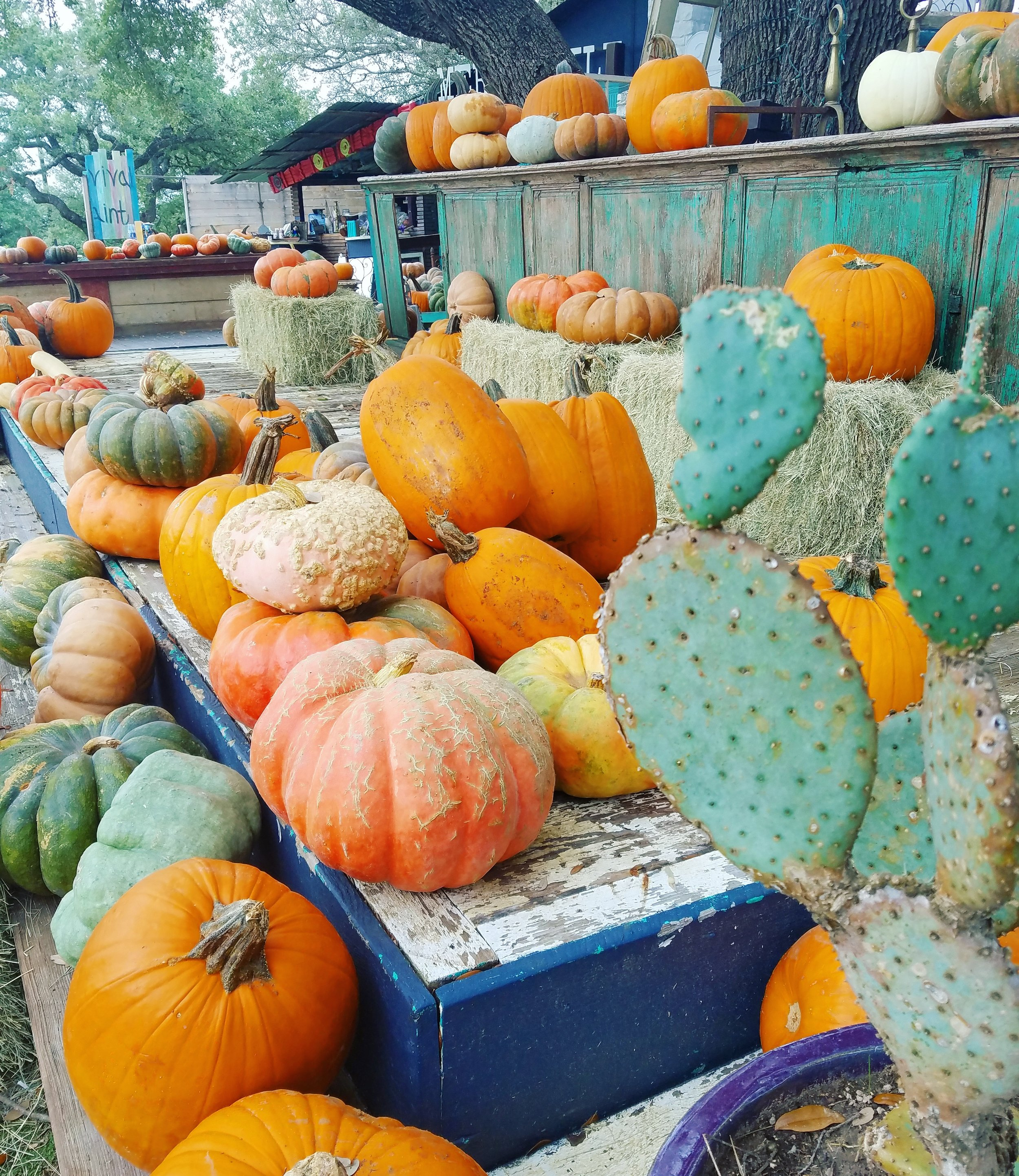 pumpkins and cactus