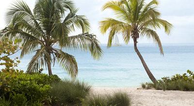 palm-trees-sandy-weddings-engaging-events-by-ali.jpg