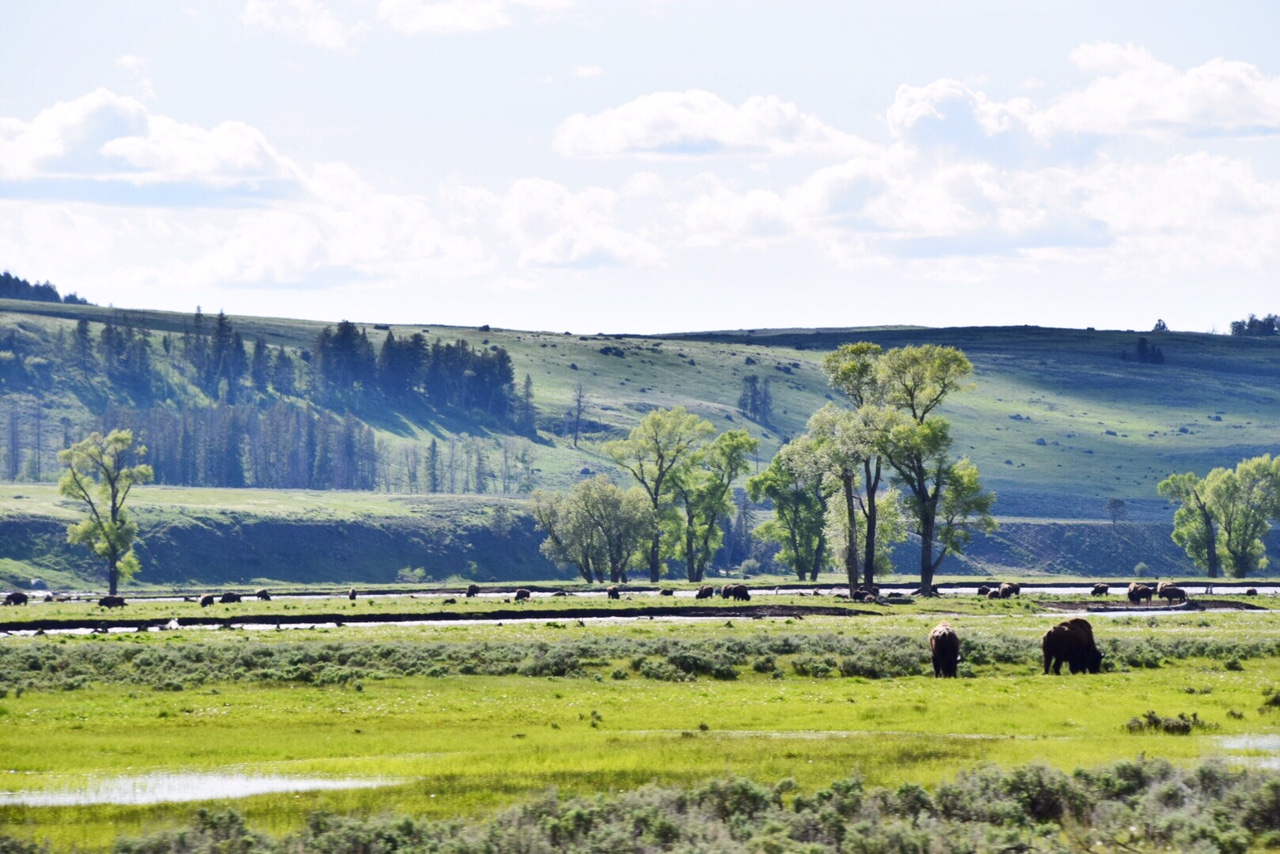 Guide to Yellowstone National Park June (33).JPG