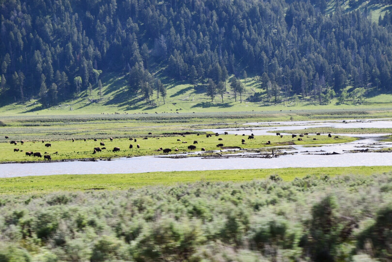 Guide to Yellowstone National Park June (32).JPG