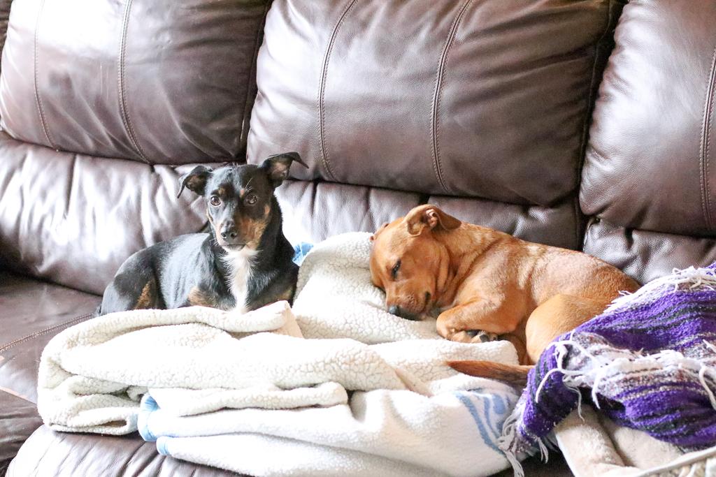 Supreme Source Dog Food - Lifestyle Blogger - Pet Blogger - MILSO Blogger - Pet Detox - Wander Dust Blog (39).jpg
