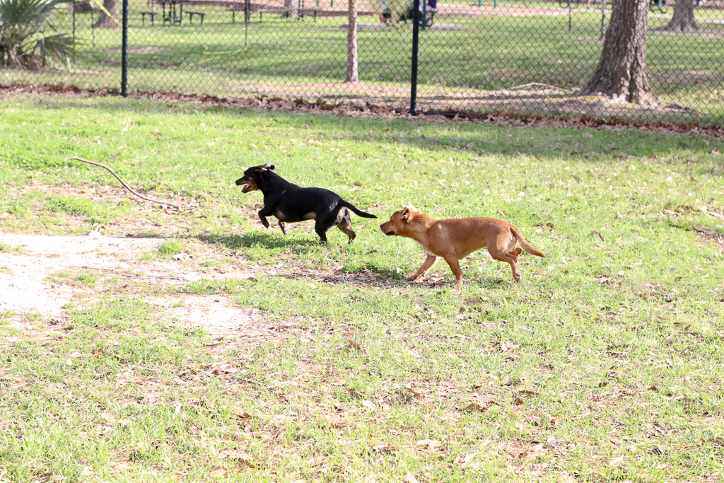 Supreme Source Dog Food - Lifestyle Blogger - Pet Blogger - MILSO Blogger - Pet Detox - Wander Dust Blog (36).jpg