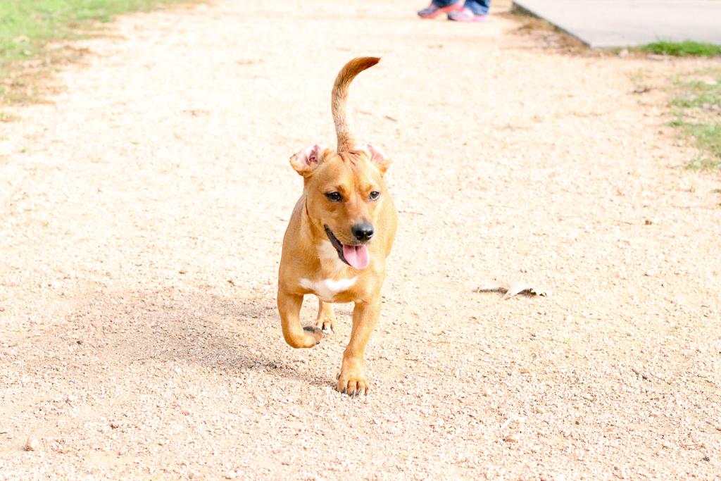 Supreme Source Dog Food - Lifestyle Blogger - Pet Blogger - MILSO Blogger - Pet Detox - Wander Dust Blog (34).jpg