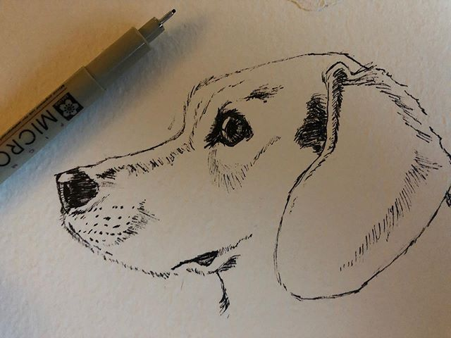 Draw what you love. . . . #inktober #inktober2019 #drawing #sketch #lagerthathebeagle #micronpen #cardstock