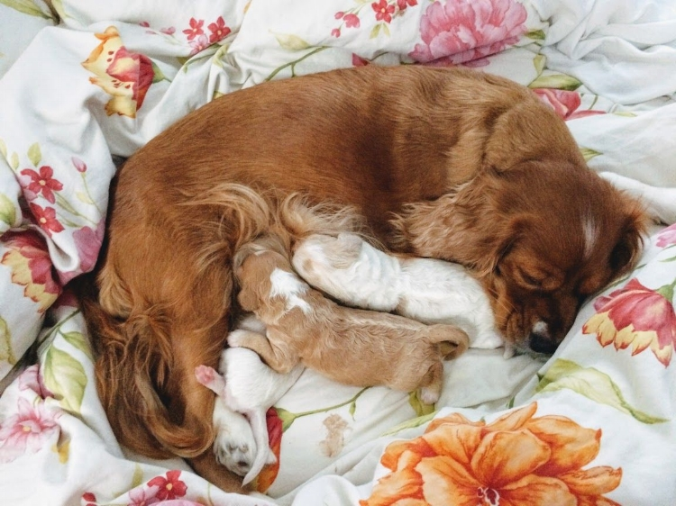 You didn't think we'd leave out a picture of our dog, did you? This is Wren nursing her 3 surprise puppies in 2017.