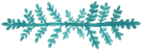 Mission Hospital birth center doula teal fern accent