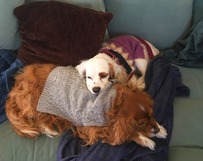 Wren and Robin (the puppy we kept) napping on the couch in 2019