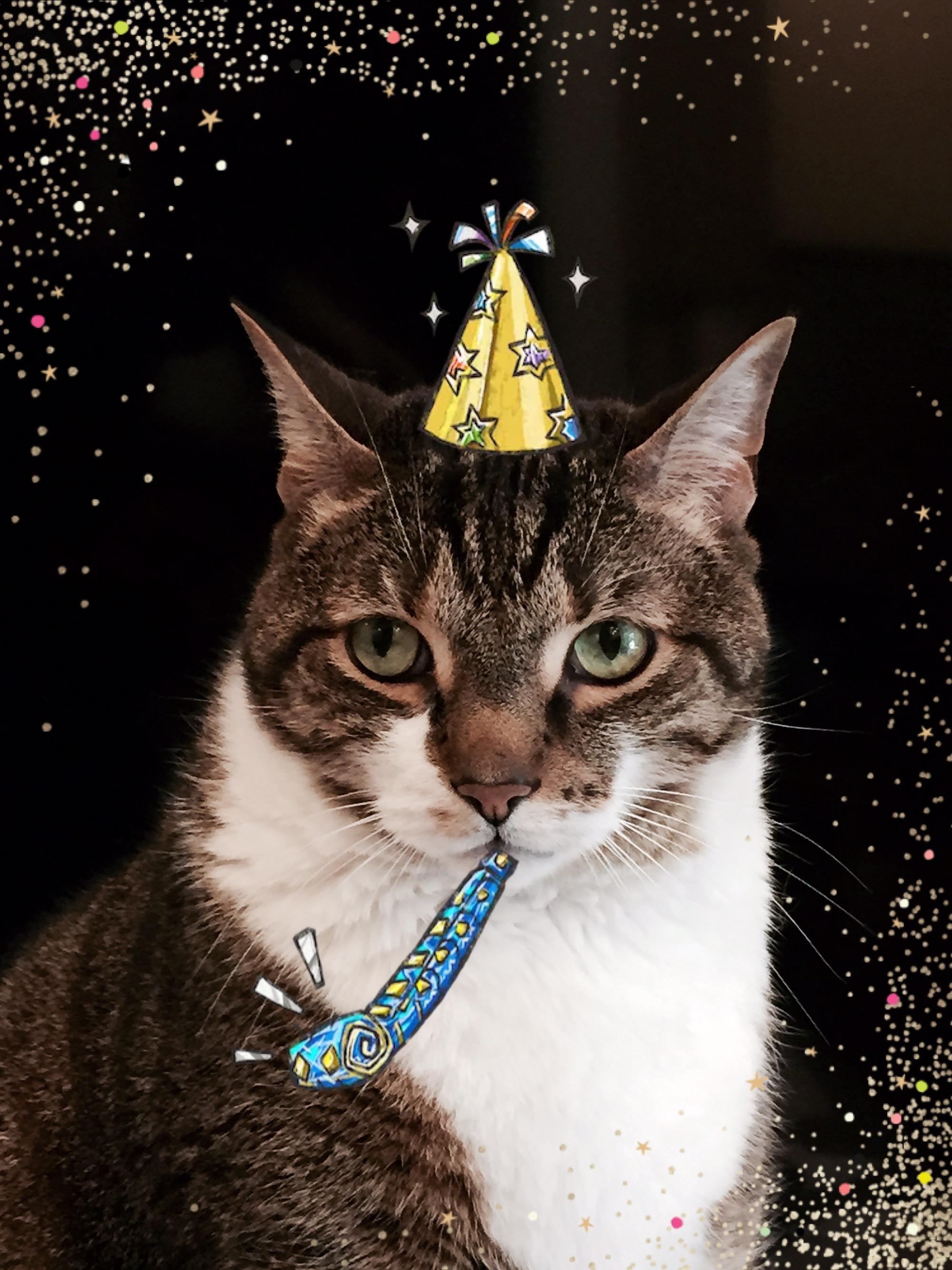 Cattus Quartet Happy New Year