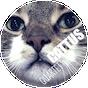 cattus-quartet-instagram.png