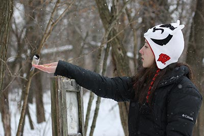 Feeding Chickadees from Your Hand