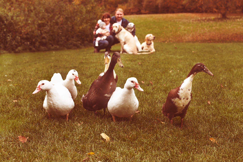 ducks-and-family-portrait