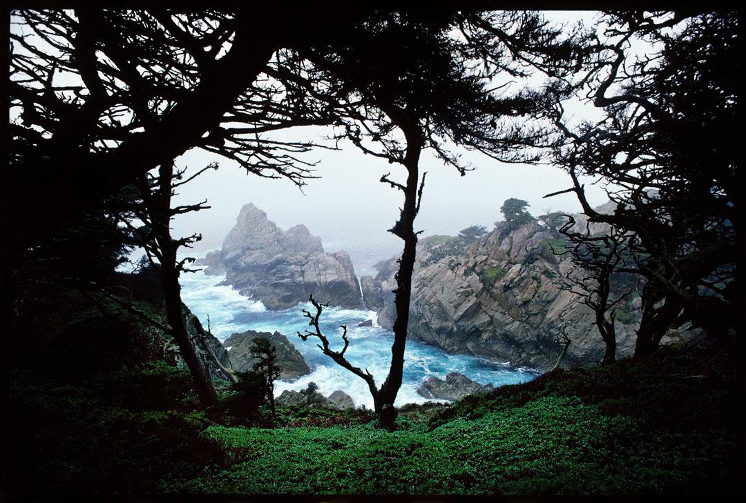 Point Lobos, Ca.