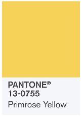 primrose yellow.JPG