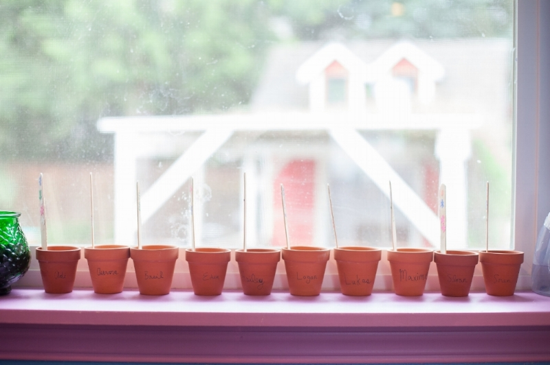 Sprouts Window Sill