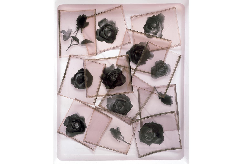 black-roses-2.jpg