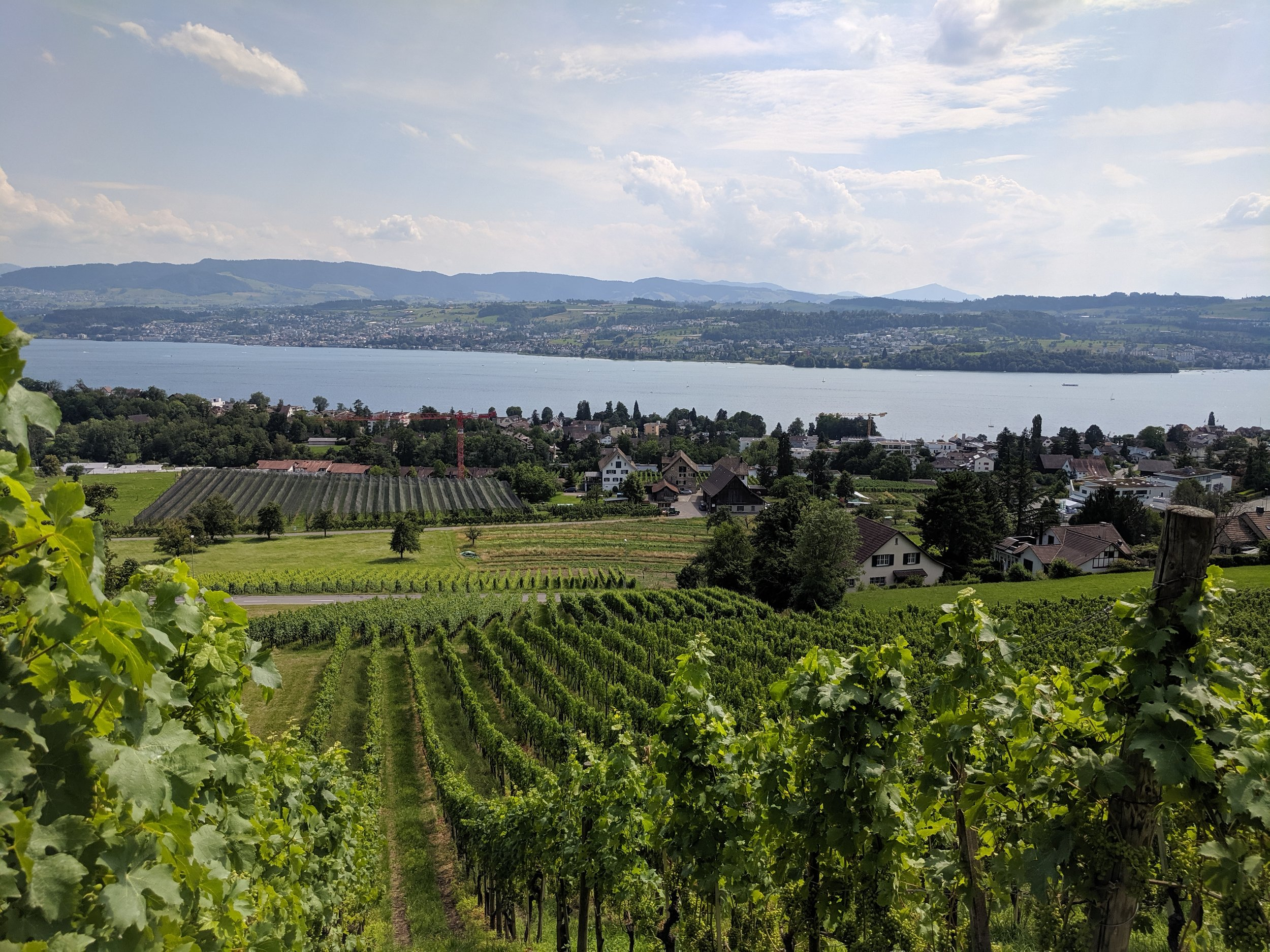Patterned beauty in the details of hillside vineyards flowing towards Lake Zurich from its south facing, northern slopes.