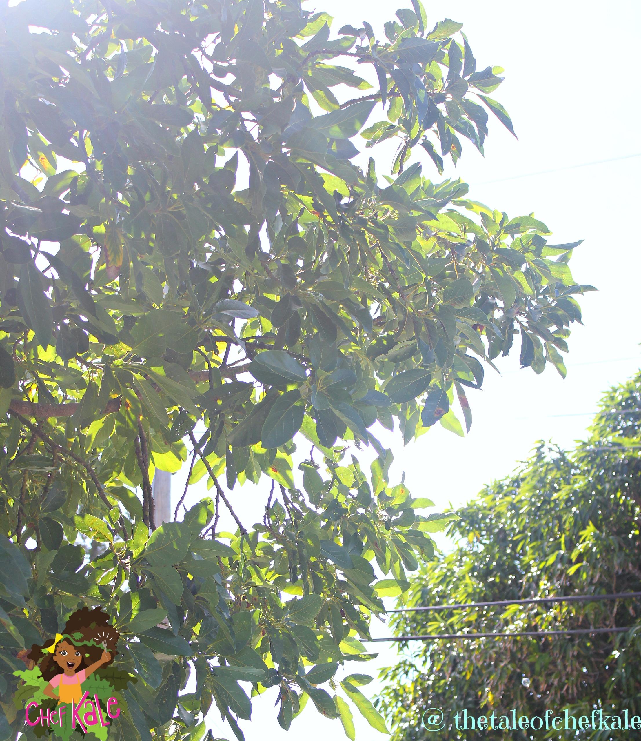 I want to grow out loud like a big, tall tree.