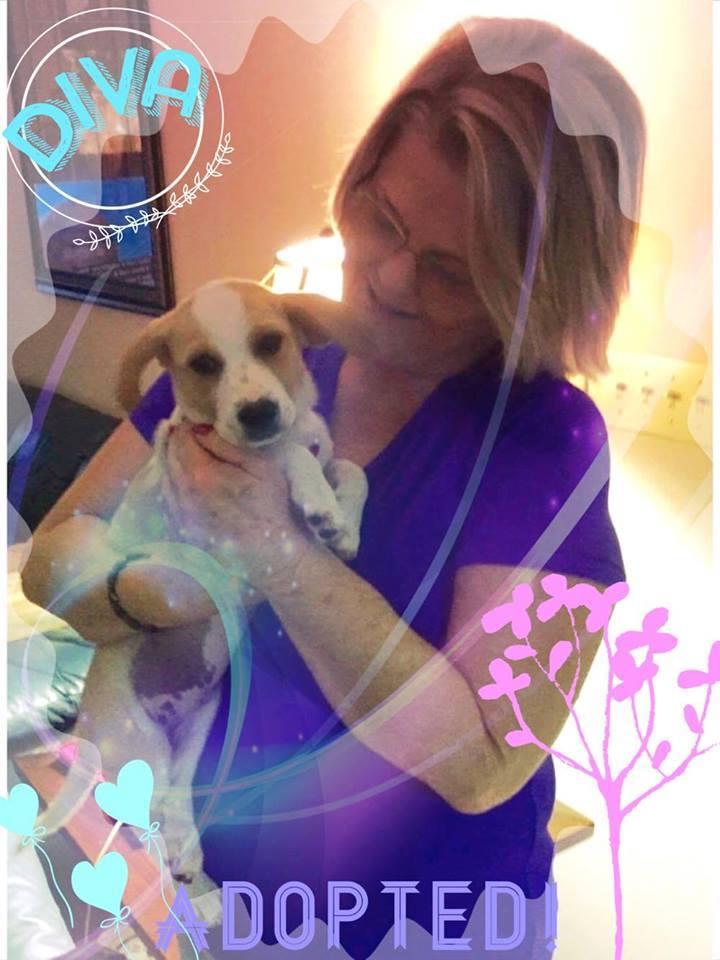 Diva2 Adoption Pic.jpg