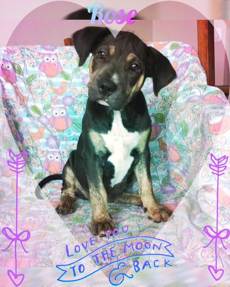 Rose Adoption Pic.jpg