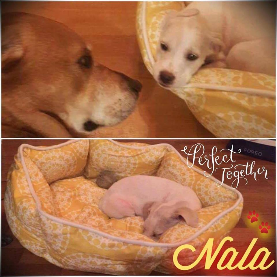 Nala Adoption Pic.jpg
