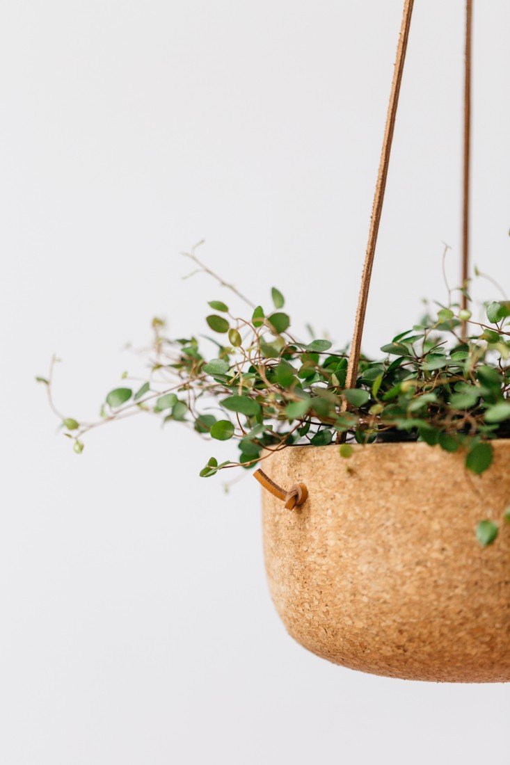 Source  The Gardenista