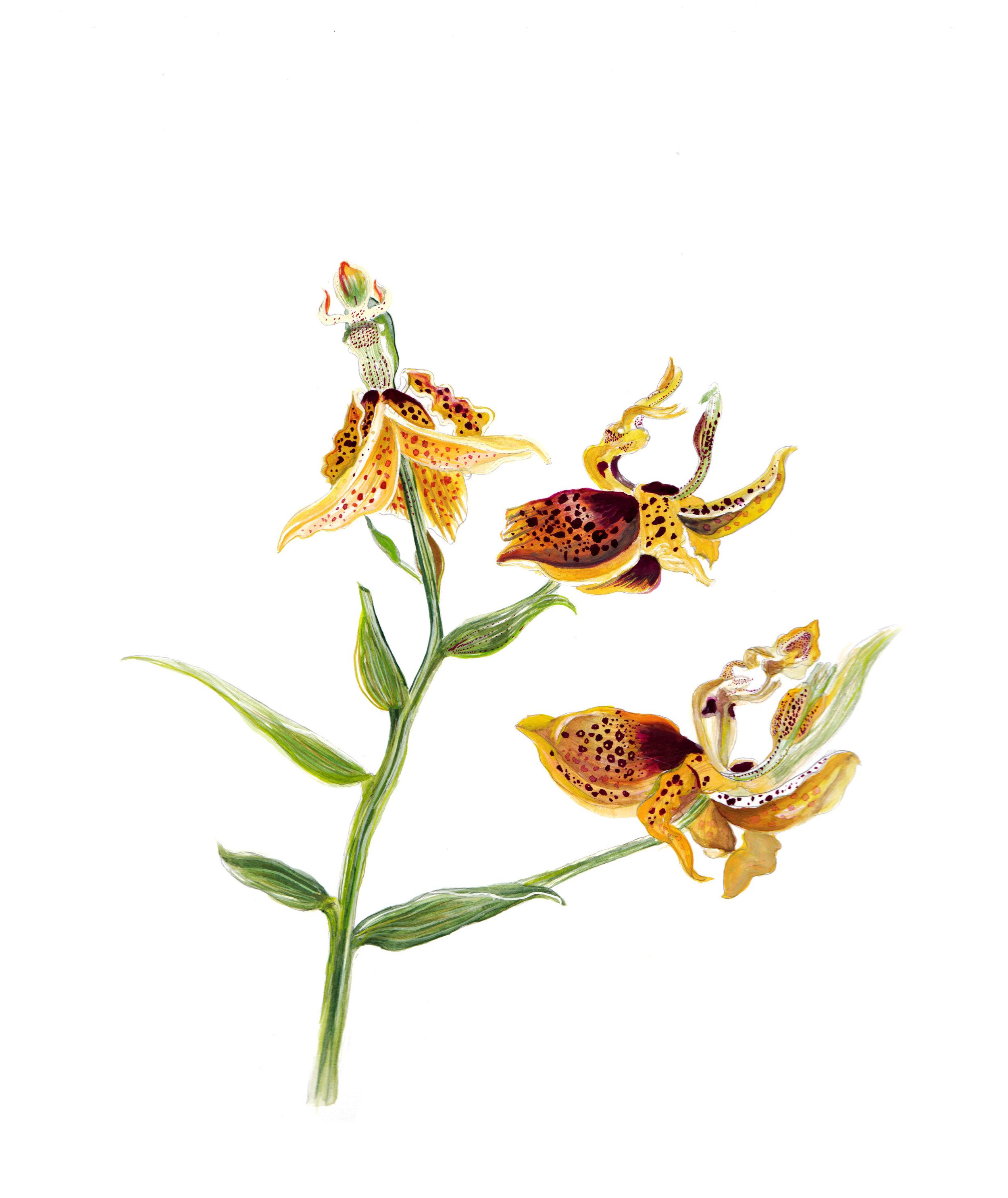 floral edited squarespace orcid.jpg