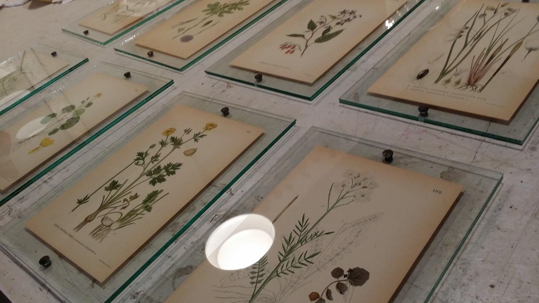Glass-frames-studiosilice.jpg