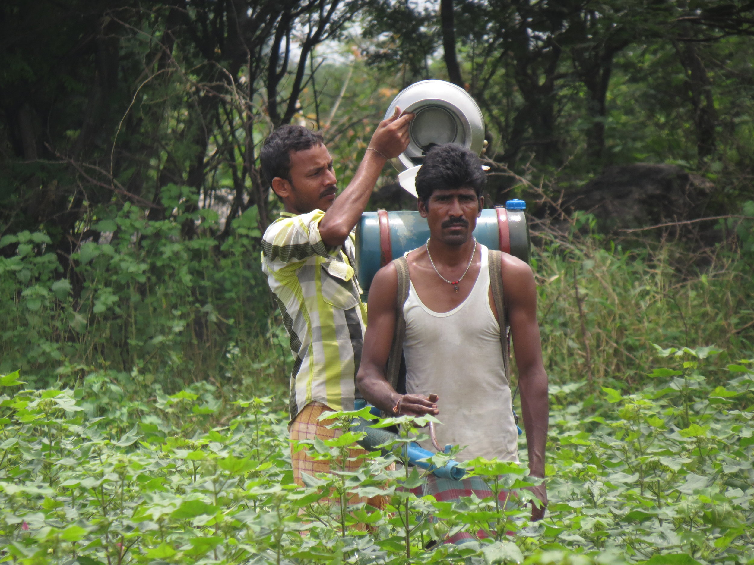 Loading pesticides onto a workers back