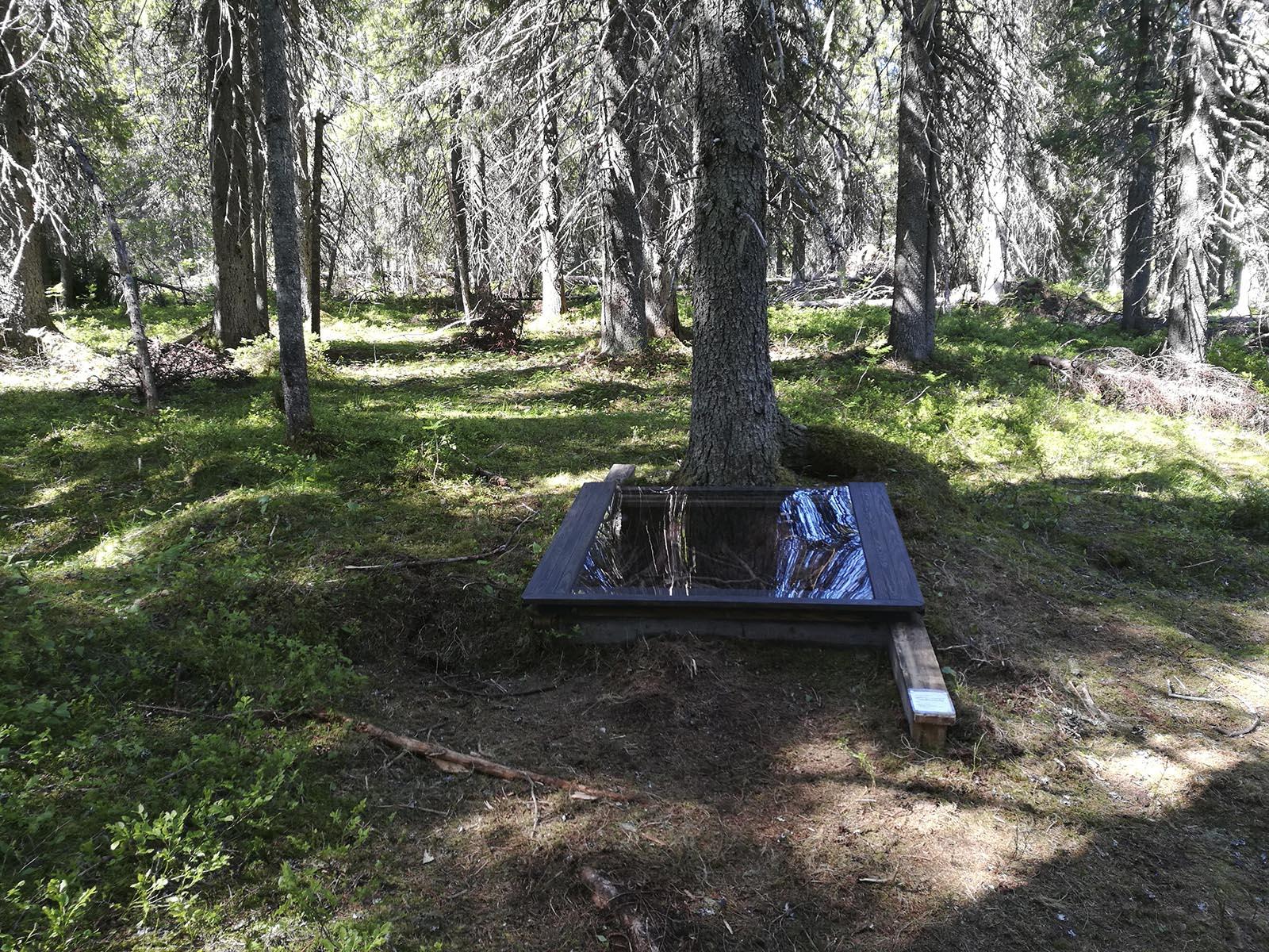 """Taiteilija Kimmo Ylösen teos """"Metsäpohjan arkekologiaa"""" sijaitsee polun varrella harvassa vanhassa kuusikossa, suurehkon kuusen juurella. Linkki teoksen kuvailutulkkaukseen löytyy tekstistä alla. Kuva: Hanna Kaisa Vainio."""