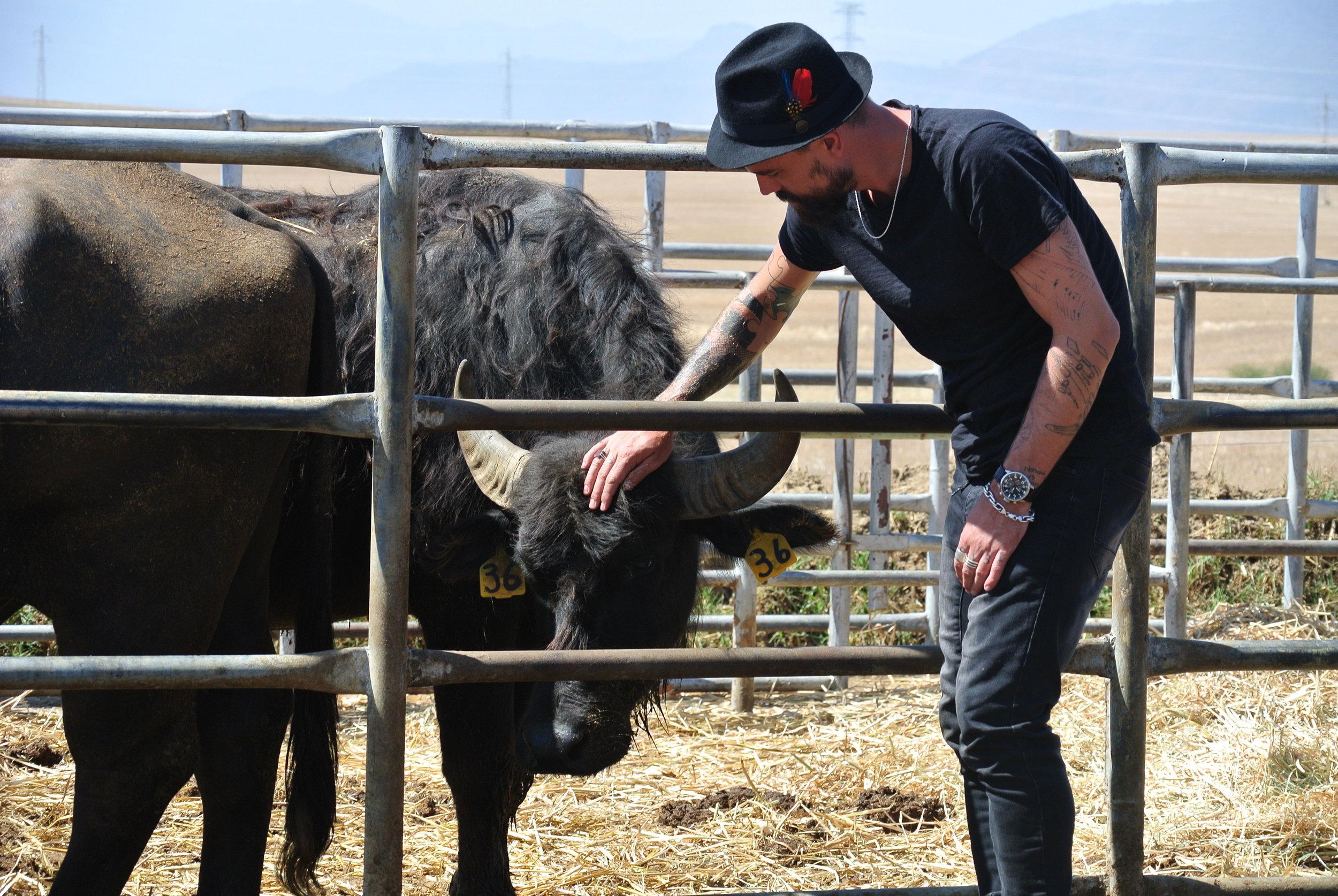 Brett Petting Buffalo.JPG