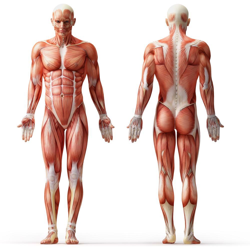 body recomposition agu enc