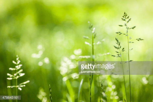Photo by Elenathewise/iStock / Getty Images