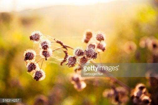 Photo by Serbogachuk/iStock / Getty Images