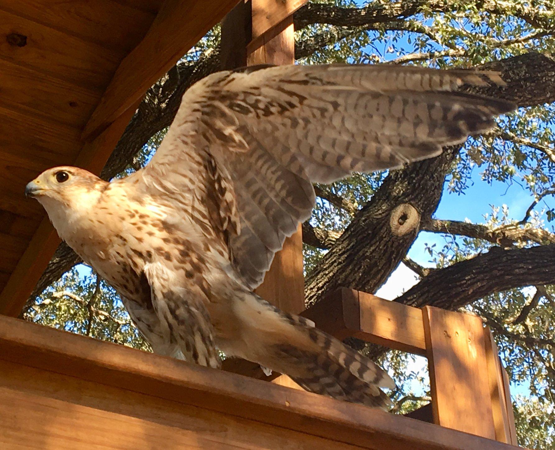 Falcon on ship.jpg