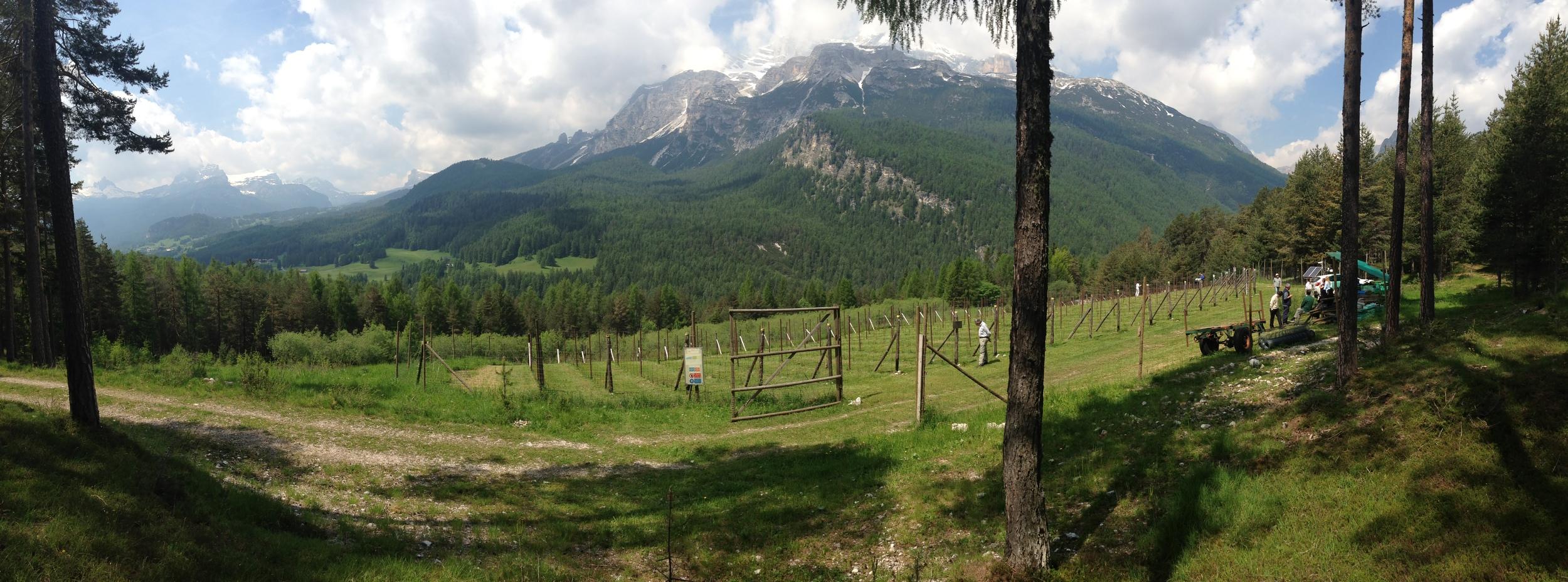 Il vigneto sperimentale di Cortina d'Ampezzo, a mt. 1.350 s.l.m.