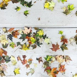 I was in the Catskills at a new client's and spotted these pretty leaves fallen on the wet, grey steps. The leaves were just starting to turn and only a few had fallen so far. I love the bright green leaves with the cool grey wood steps!