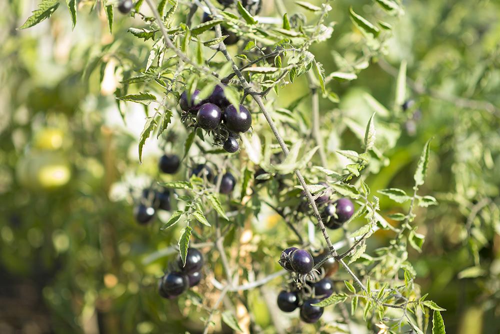 Hyperespace profite également d'un carreau de jardin potager, les membres peuvent y cultiver les fruits et légumes qu'ils veulent