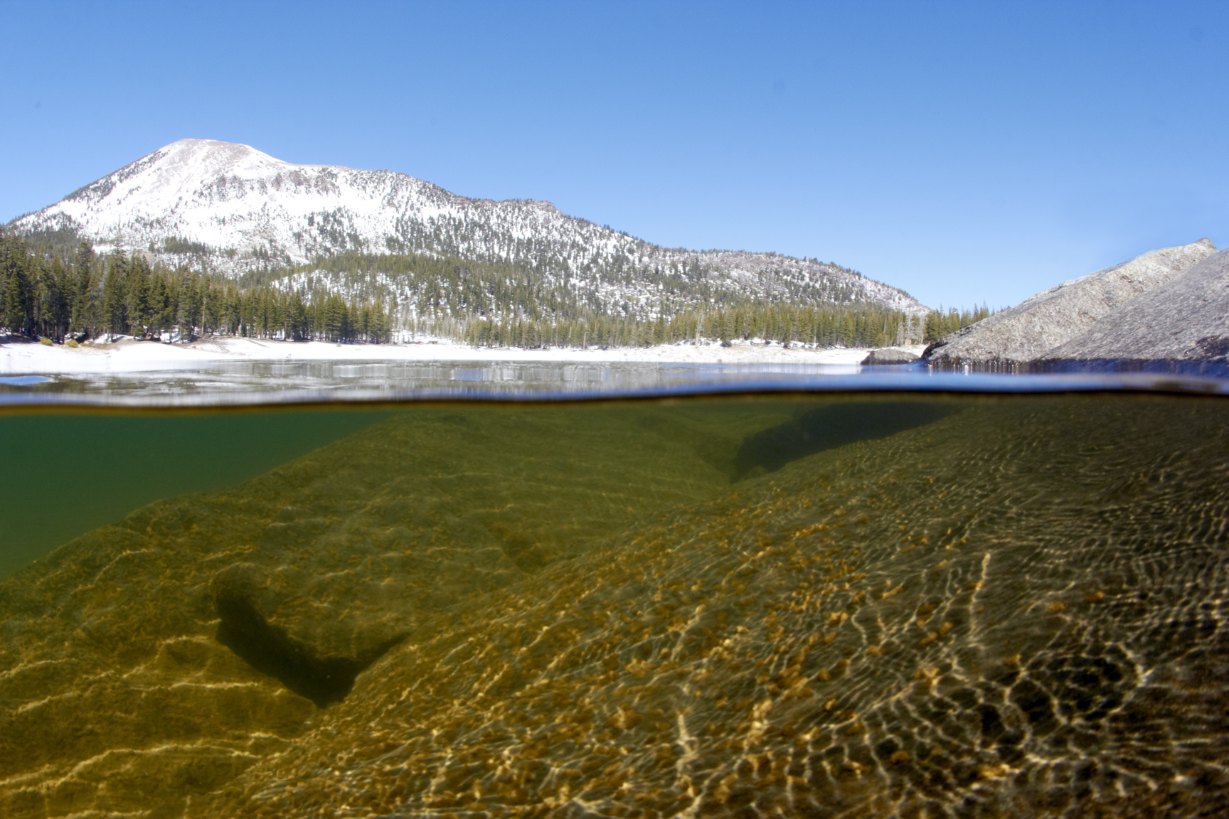 IMG_0439_HORSESHOE LAKE SINGLE.jpg