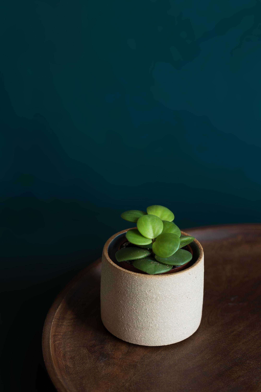 Small plant still life-2.jpg