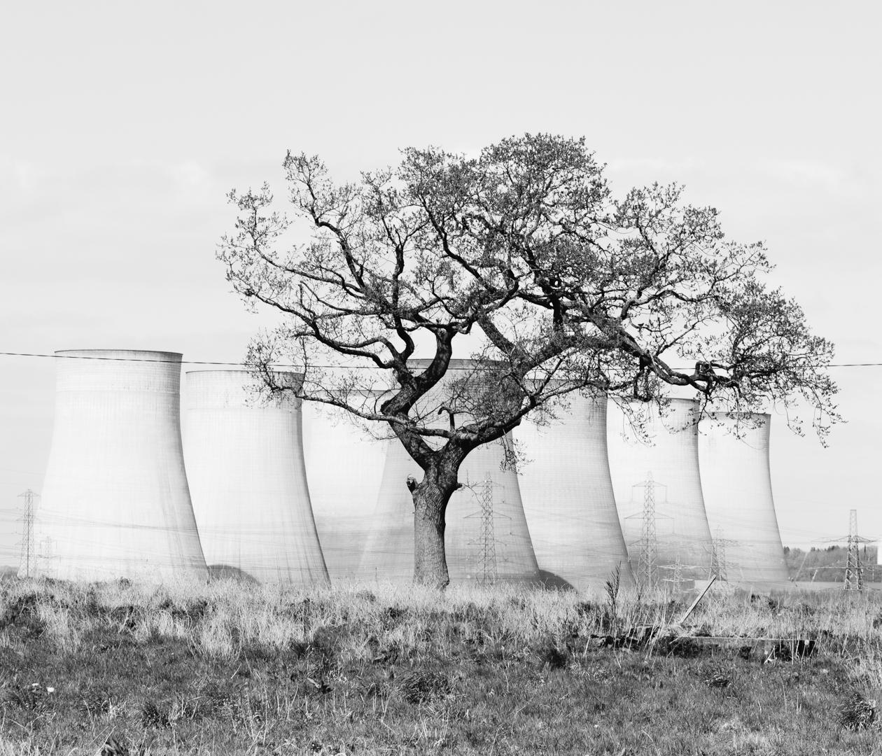 (INSTA 6x7) Power Plant Tree BW_.jpg