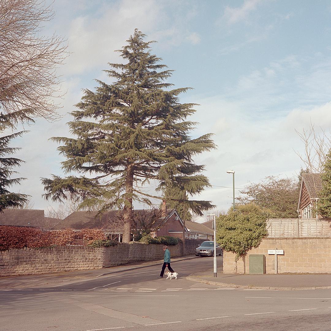 (INSTA) Tree woman dog_120_Colour_Roll 5_005.jpg
