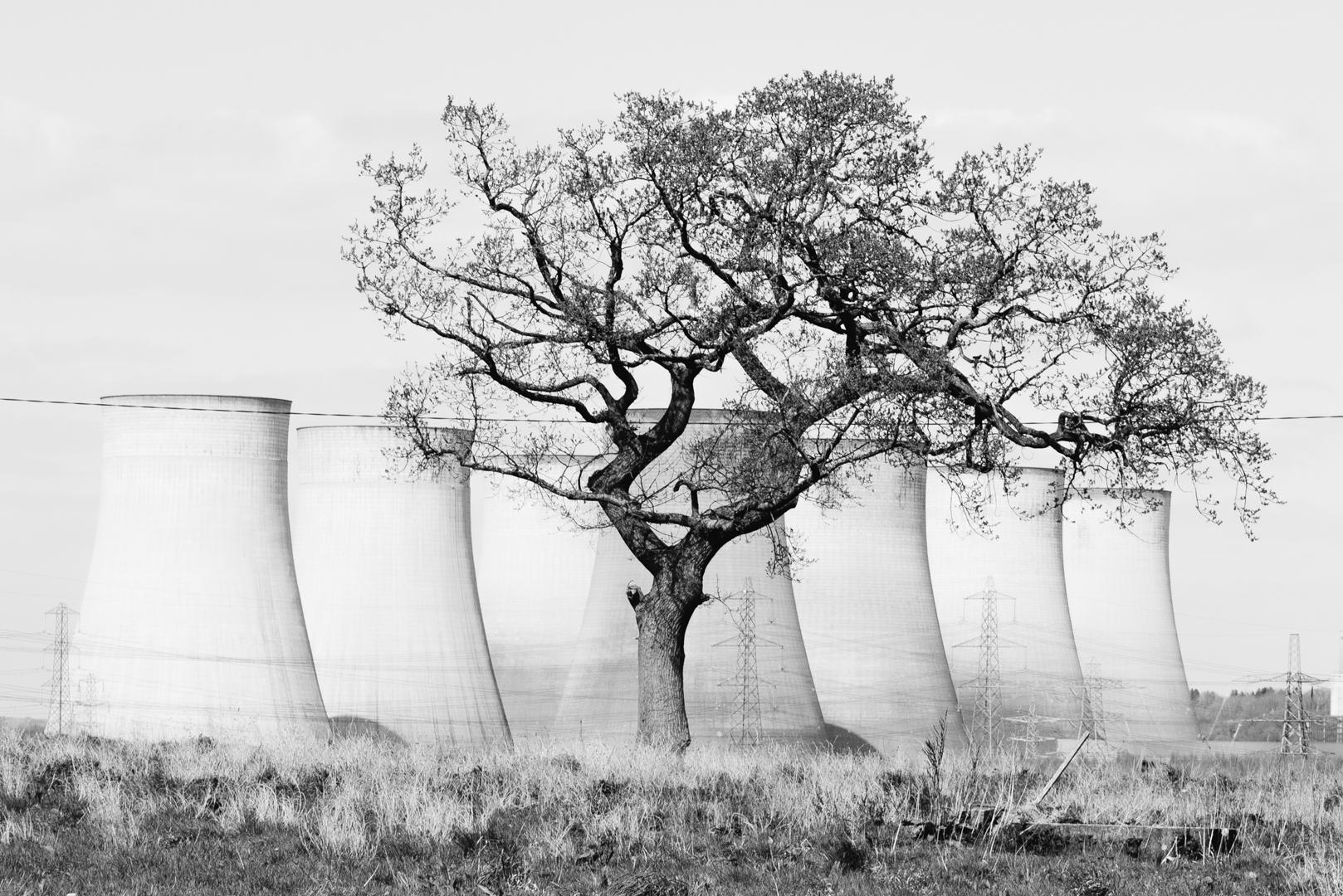 (INSTA) Power Plant Tree BW_.jpg