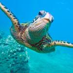 Oceans Quiz