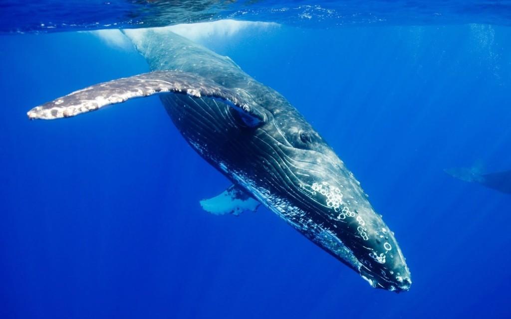 blue-whale-1024x640.jpg