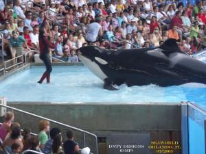 orca-300x225.jpg