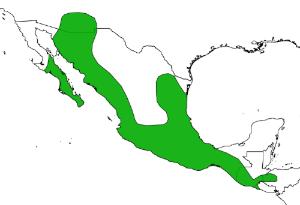 Distribution of  Leptonycteris yerbabuenae