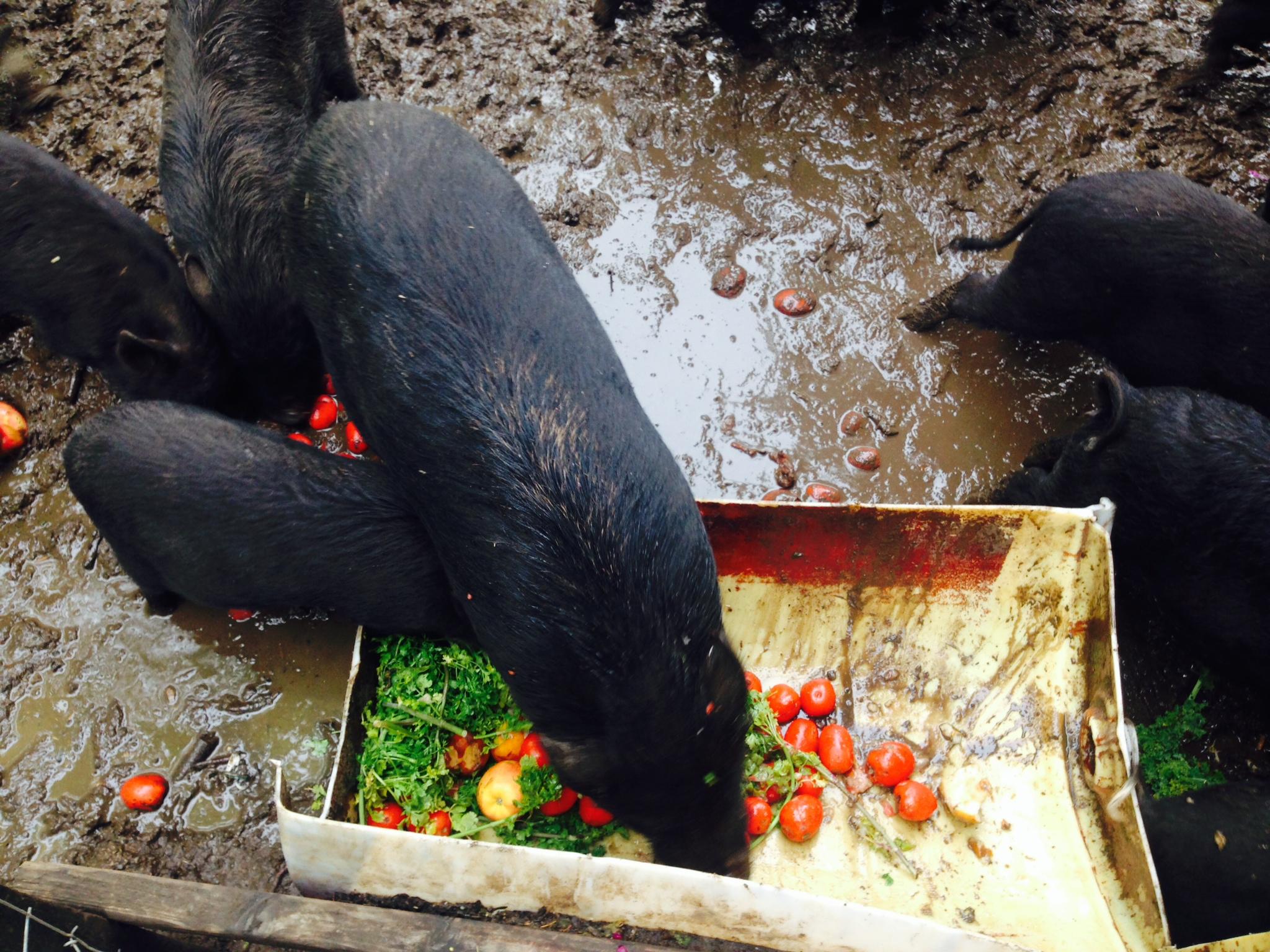 Feed animals.JPG