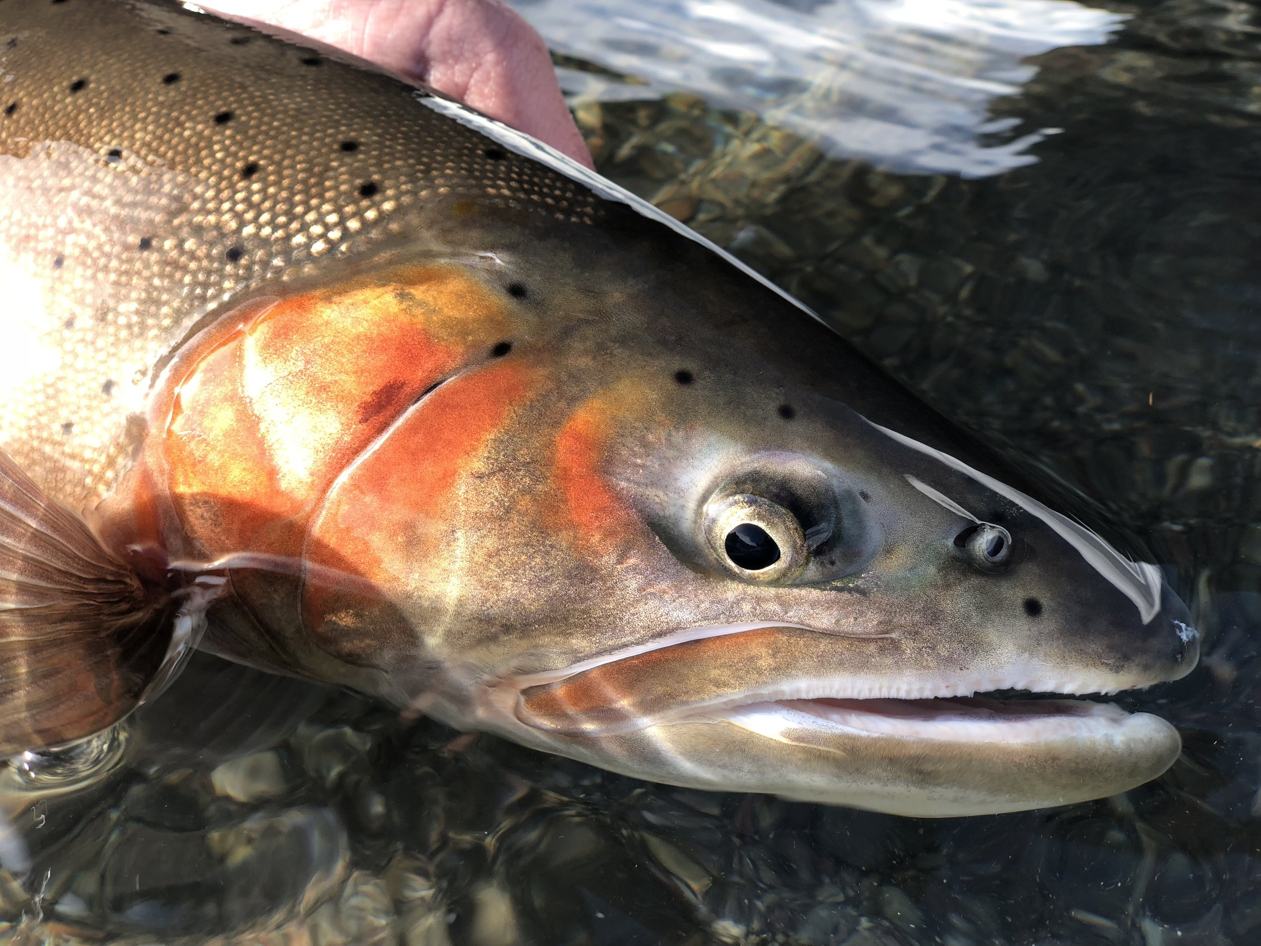 Eye see you !! Gorgeous colors.  Photo: Eric Warner @goneclamming