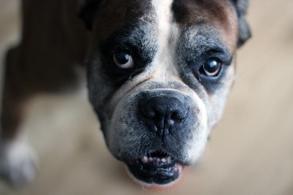 dog-1590377_960_720.jpg